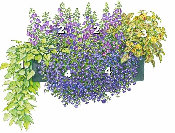 квіти в контейнерах фото