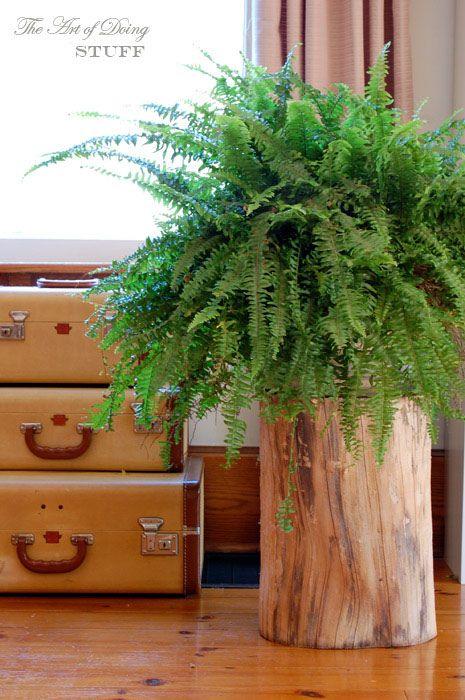 В х'юге оселі обов'язково повинна жити хоч одна жива рослина