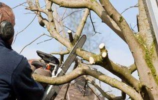 Обрізка плодових дерев