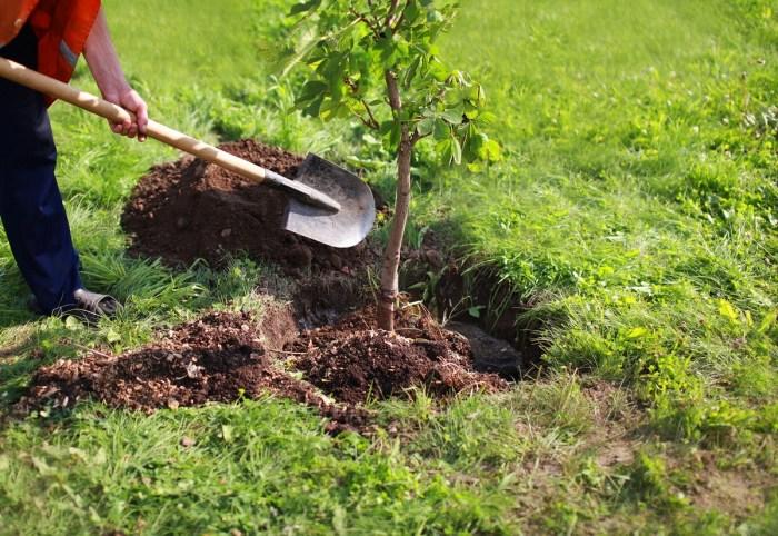Квітень - час садити дерева