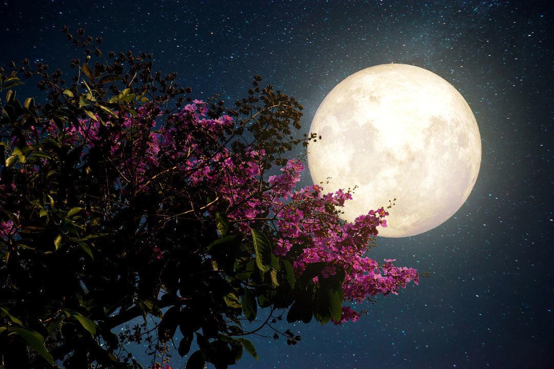 Місячний посівний календар по місяцях на 2018 рік