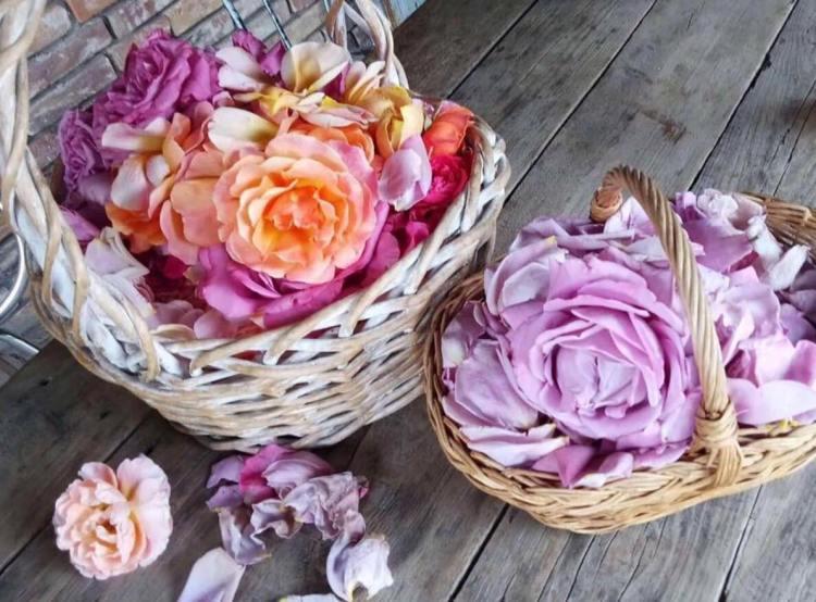 Які пелюстки троянд використати для лосьйону?