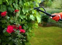 Позакореневе підживлення рослин