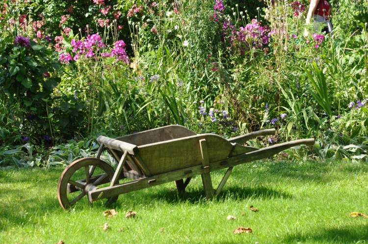 Які роботи в саду, на городі і на квітнику варто зробити в липні?