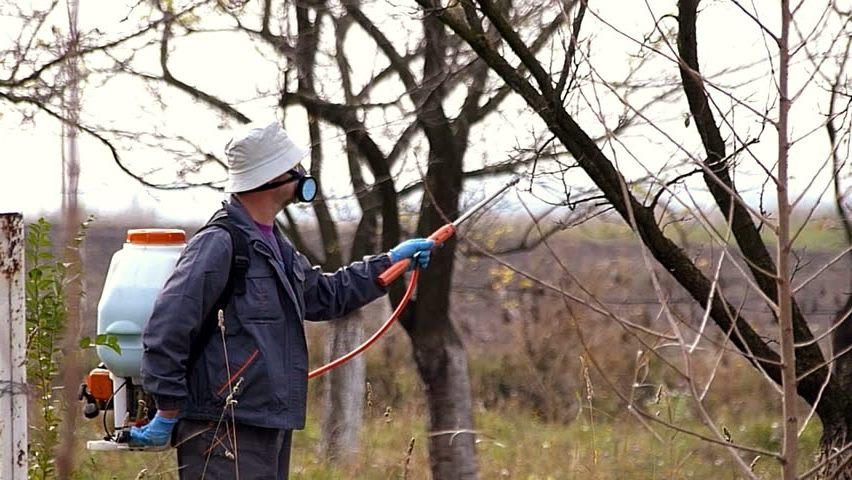 Осіннє викорінююче обприскування саду проти шкідників і хвороб