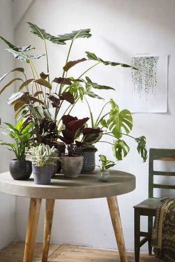 Для рослин можна виділити окремий предмет меблів