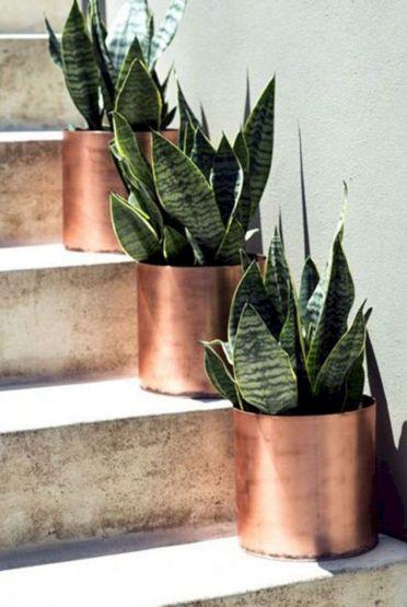 Драбина – вакантне місце для рослин