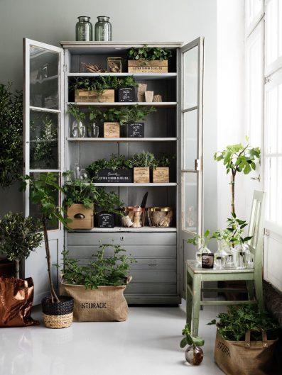 Якщо рослин багато, можна виділити їм цілу шафу