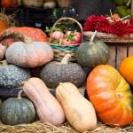 Вражаючі сорти гарбуза — і красиві, і смачнющі!