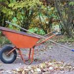 Роботи в саду і на городі в листопаді