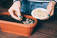 Як визначити, чи зійде старе насіння?
