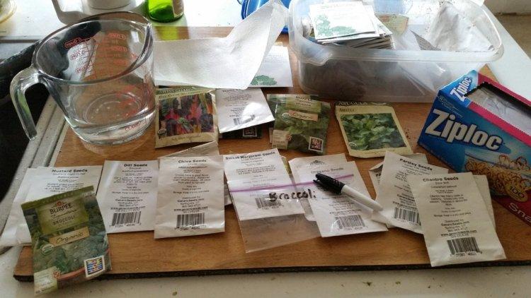 Перевірка насіння на схожість дає змогу зрозуміти чи достатньо насіння, чи потрібно купити ще