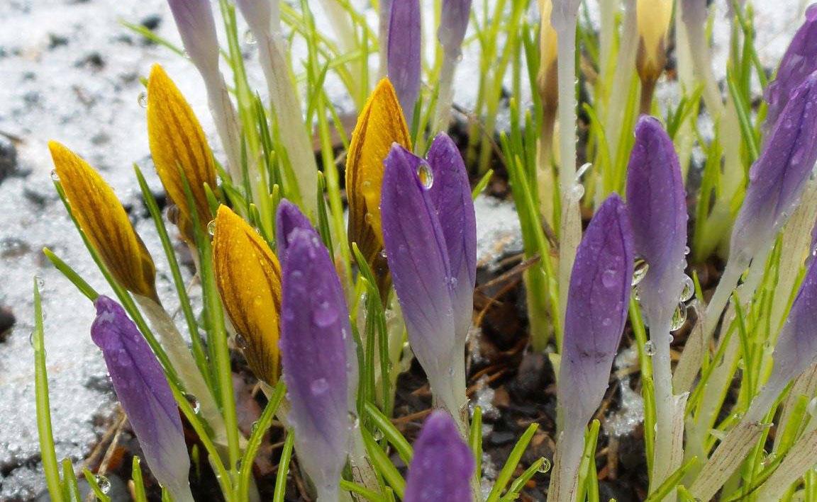 Роботи в саду і на городі в березні