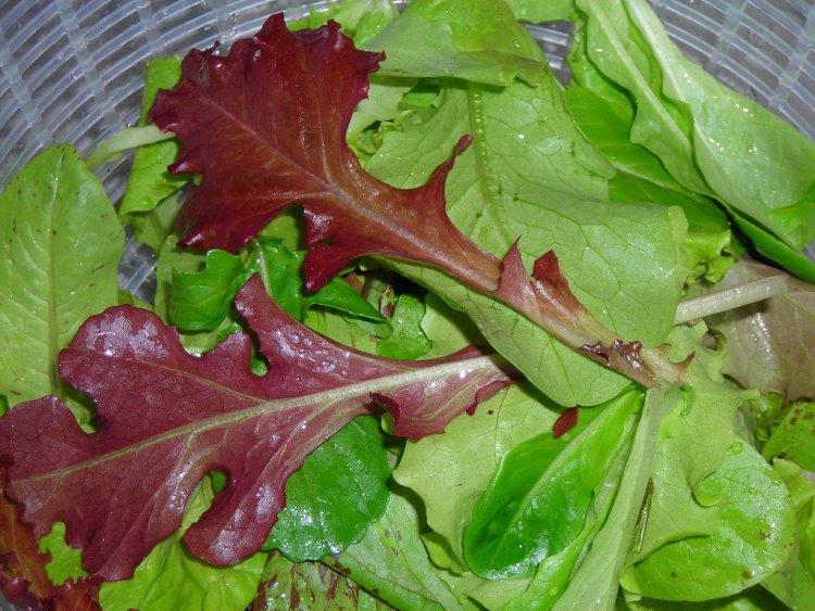 Дуболистий салат