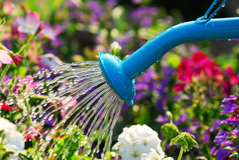Роботи в саду і на городі в червні
