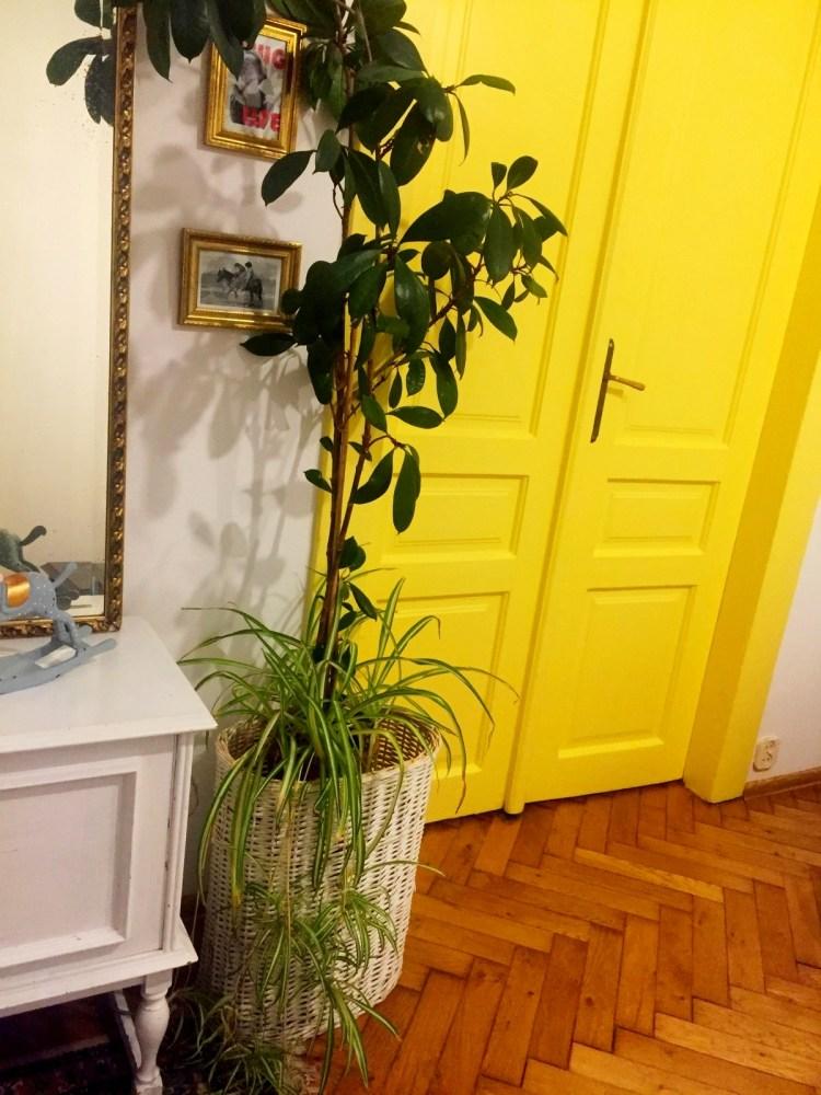 Рослини у інтер'єрі