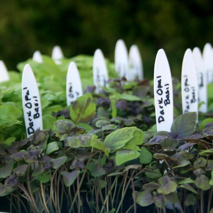 Маркування посівів підручними засобами