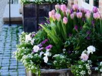Весняні цибулинні в контейнерах, або Весна в горщику
