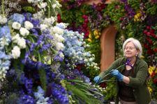 Квіткове шоу Челсі – історія, значення, сьогодення
