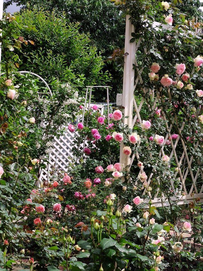 В саду знайшлося місце для декоративних чагарників. «Дейції у мене дві, ця відіграє свою роль навесні зеленою масою, як розділювач, а коли квітне білим - підтримує концепцію біло-рожевого»