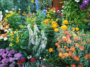 Многолетние цветы   Цветы - многолетники: фото, названия