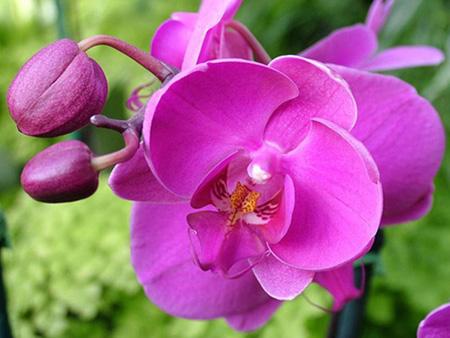 Домашние цветы в горшках, фото и название и уход за ними