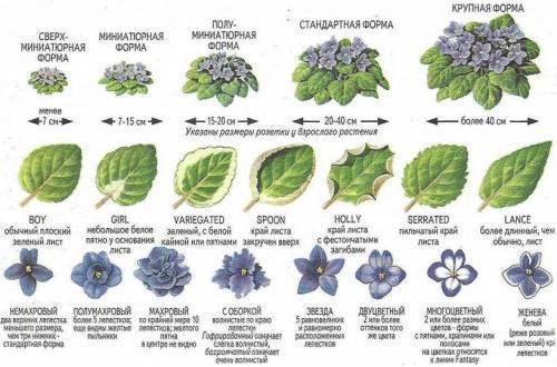 Как определить название комнатного растения. Определитель ...