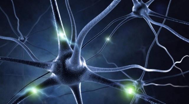 Gehirn und Geist