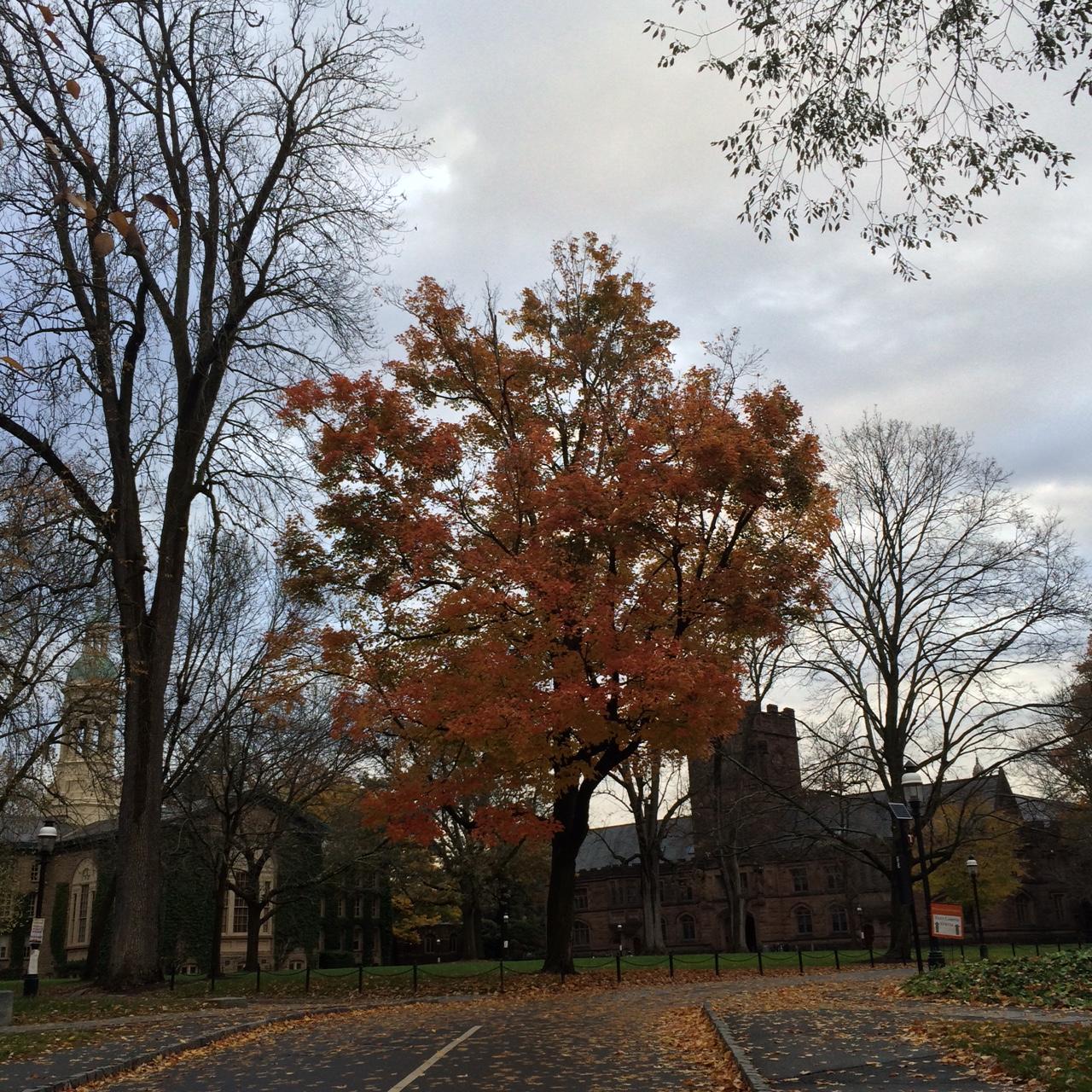 Princeton16