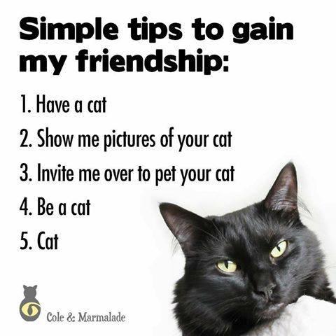 Ways to gain my friendship.jpg