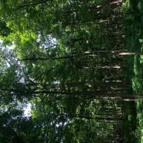 Morton Arboretum-13