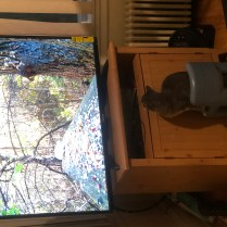New TV-5