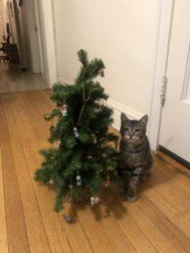 Christmas Tree-4