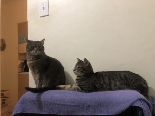 Lola and Mateo-3