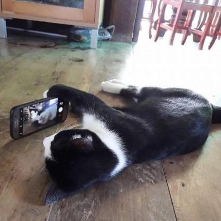 Cat picture-1.jpg