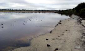 Bibra Lake 2