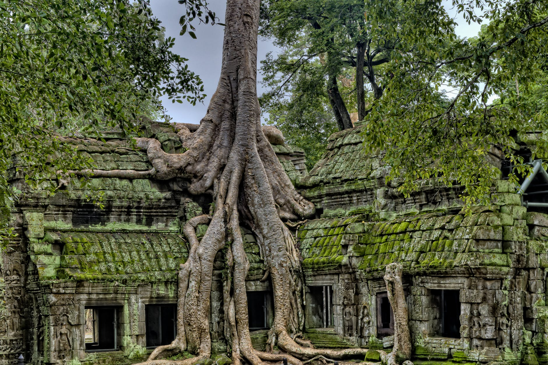 trees temple roots