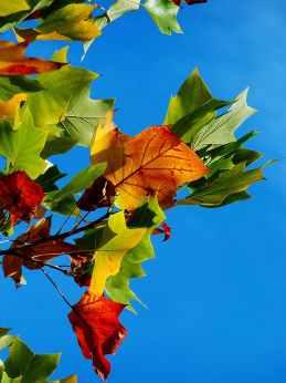 park leaf leaves autumn