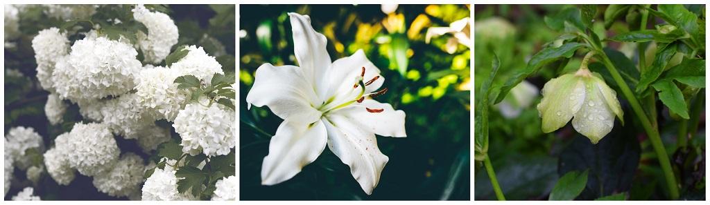 vrt kao katolički kutak za molivu; bijelo cvijeće