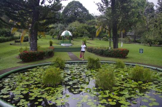 The Grenadines: St Vincent botanical garden