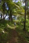 Lush DOminica island - forest walk