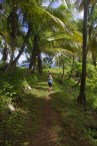 Lush DOminica island - forest walk