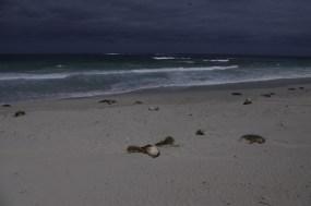 Seal Bay Conservation Park Kangaroo Island with kids