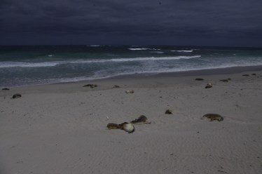 Seal Bay Conservation Park Kangaroo Island with kids