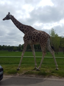Woburn safari: the wild animals