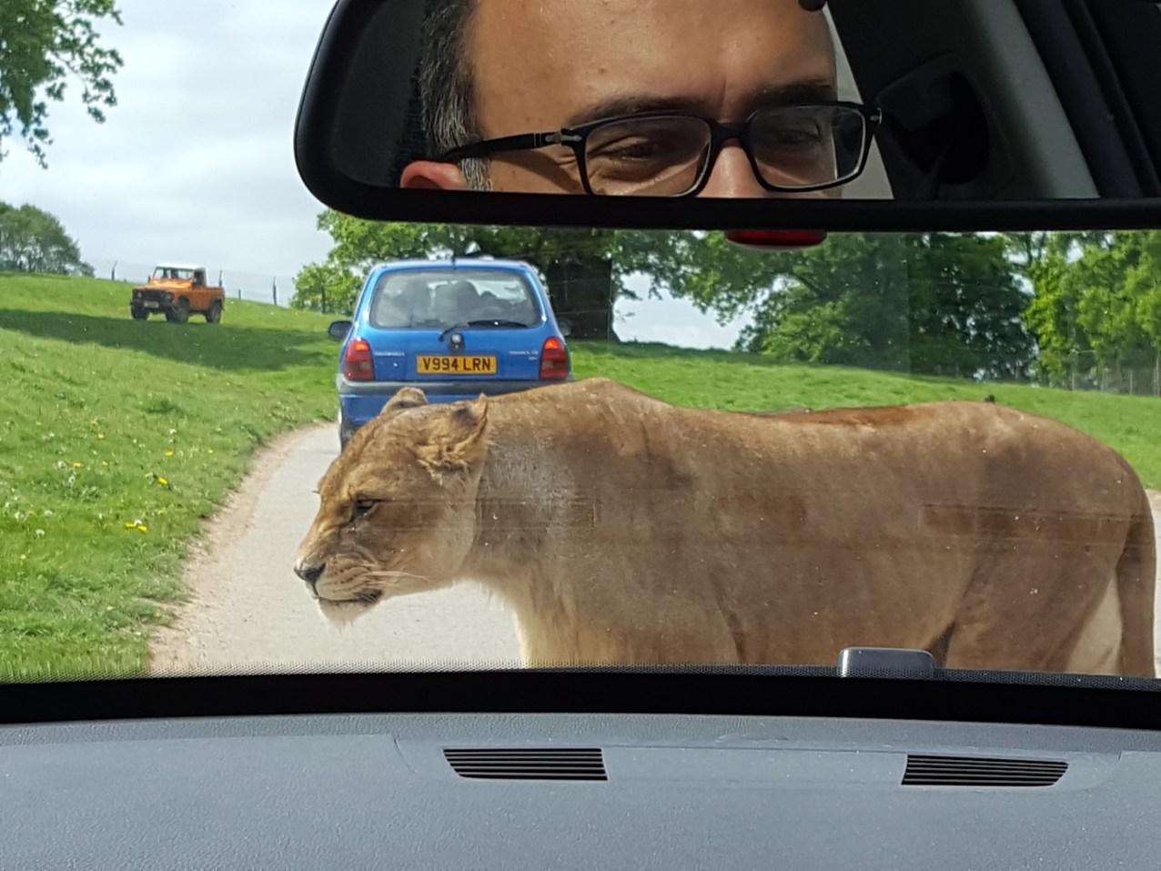 Best day trips from London: Woburn safari