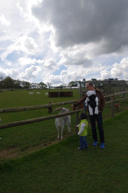 Best days out in Hertfordshire : Hatfield Farm goats