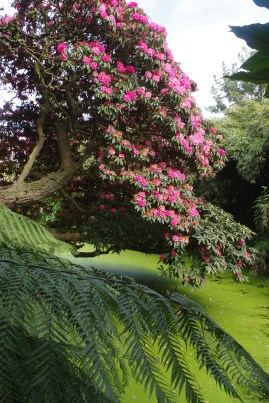 Cornwall with kids: The Lost Gardens of Heligan