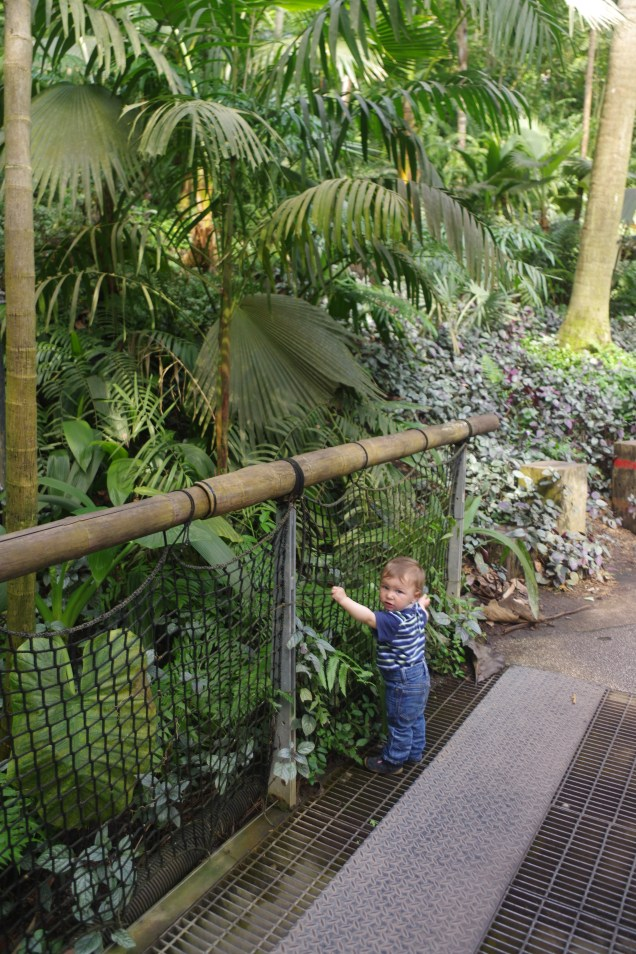 Eden project: the rain forest