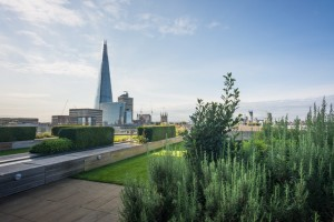 Nomura-International-PLC-roof-garden-©-Diana-Jarvis-300x200